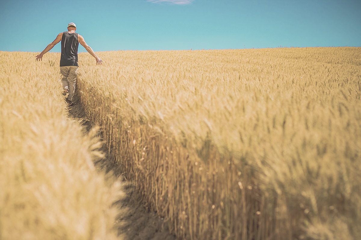 An image filling wheat field in the foreground. A path leads through it where a person walking through has flattened the wheat plants. The person is in the far back with their arms stretched out on their sides, touching the wheat left and right of them.