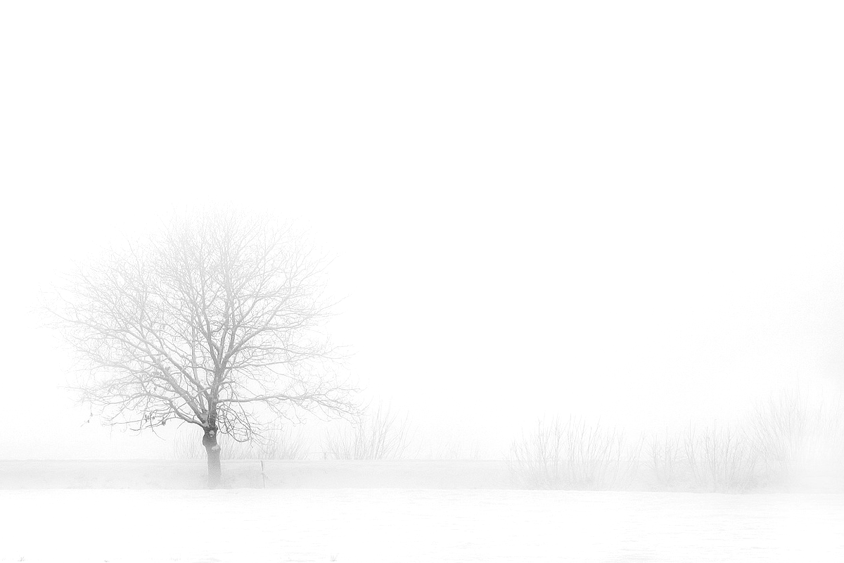 Snowy winter landscape with a single tree engulfed in fog.